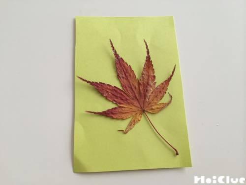 色画用紙に乗せた乾燥させた落ち葉