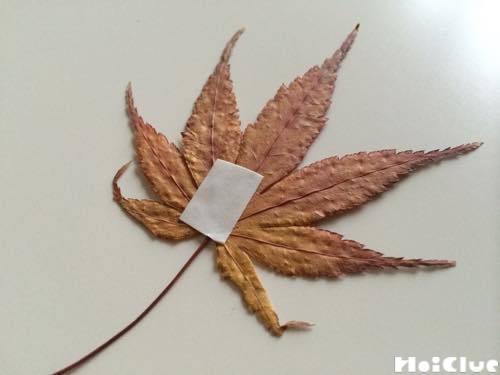 葉っぱの裏に両面テープを貼った写真