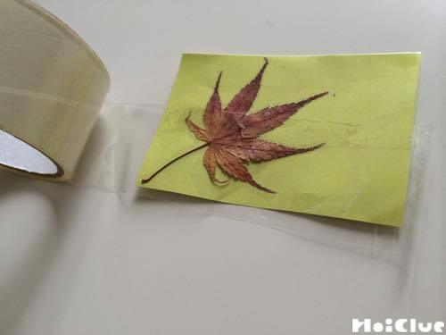 画用紙に貼った葉っぱの上から透明なガムテープを貼る様子