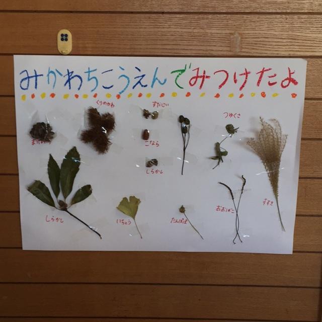 【アプリ投稿】秋の植物たち