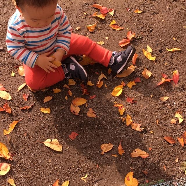 【アプリ投稿】落ち葉を眺めて触ってみるあそび