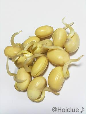 豆もやしの育て方~短期間で楽しめる!カンタン室内栽培~