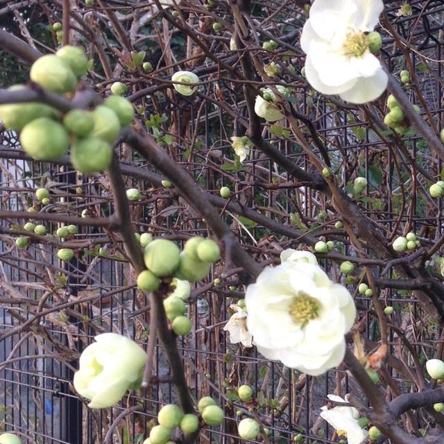 【アプリ投稿】【春を感じる花】