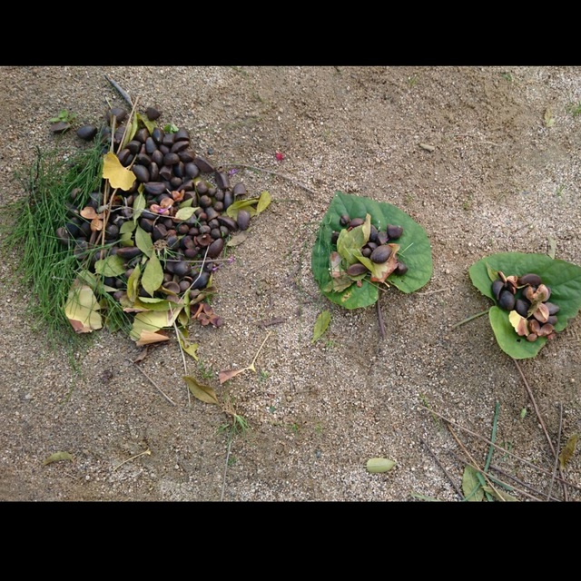 【アプリ投稿】おままごと 葉っぱのお皿