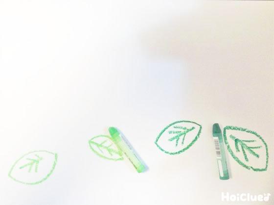 画用紙にアジサイの葉を描いた様子