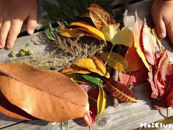 集めた落ち葉の写真