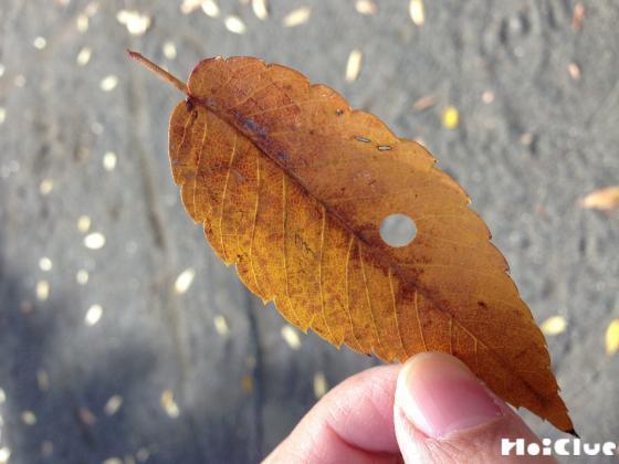 落ち葉に穴を開けた写真