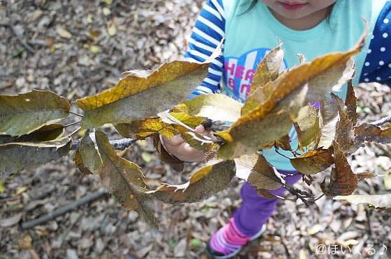 木の葉を触っている写真