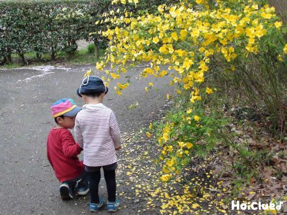 黄色い花のそばでお散歩している写真