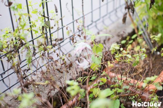 植物の上にのっかっているシャボン玉の写真