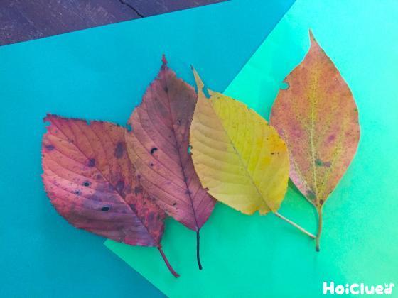 葉っぱを集めている写真