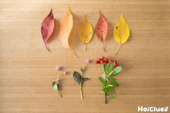 落ち葉を集めた写真