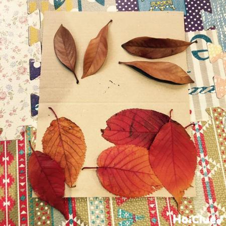 紅葉を色別に分けた写真