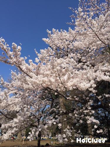 桜のひみつ〜身近な植物について知ろう〜