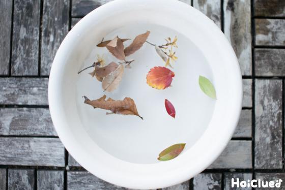 洗面器の水に落ち葉を浮かべた写真