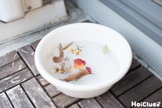 落ち葉を水につけている写真