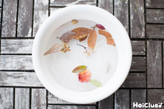 洗面器の水が凍っている写真