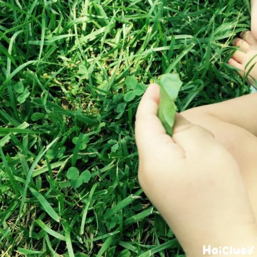 草を摘む子どもの写真
