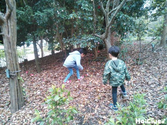 公園で落ち葉を拾う子どもたちの様子