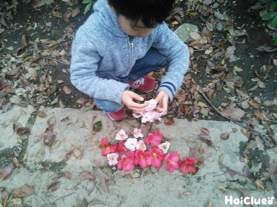 椿の花を拾い集めている子どもの様子