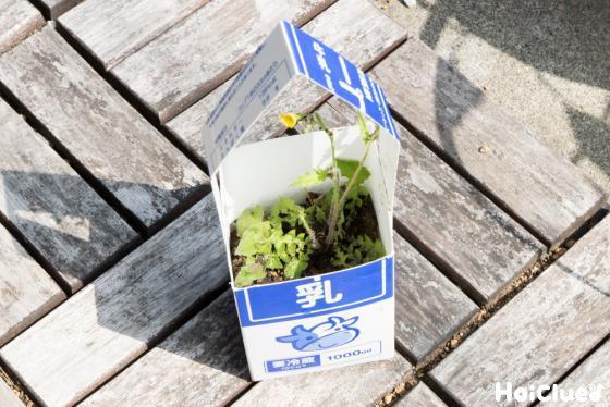 バックに植物を入れた写真