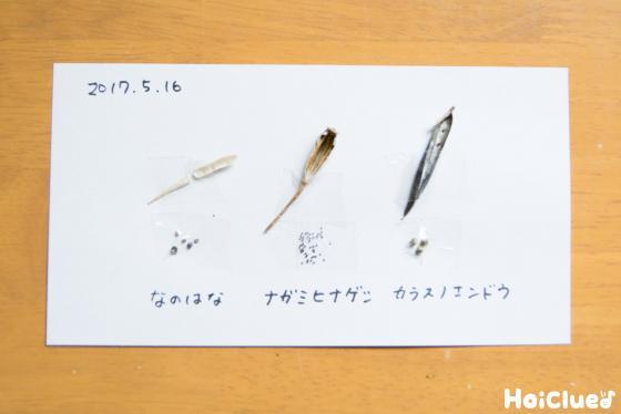 【工作コラム】「初夏の種」の小さな図鑑〜素材/初夏に集まる種