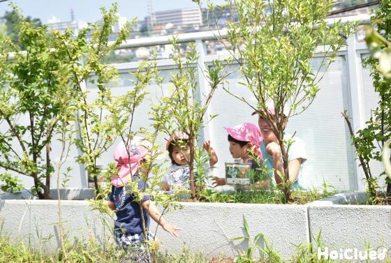 外の植え込みで遊ぶ子どもたちの様子