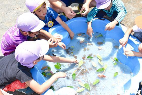 水の入ったたらいに葉っぱの船を浮かべて遊ぶ子どもたち