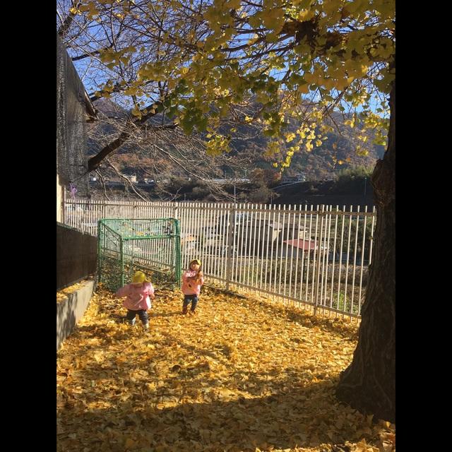 【アプリ投稿】〔秋 イチョウの葉遊び〕1歳児