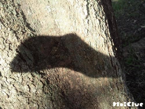 木の幹に影絵を映す様子