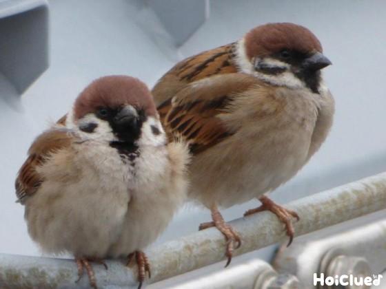 ちゅんちゅん!スズメのあれこれ〜身近な野鳥について知ろう!〜