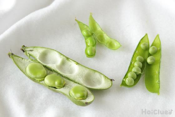 お豆の写真