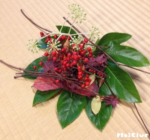素材の植物の写真