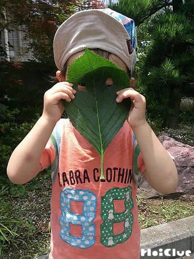 大きな葉っぱに穴を開けお面のように顔の前に持つ子どもの写真