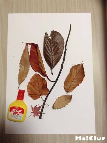 画用紙の上に落ち葉を並べた写真