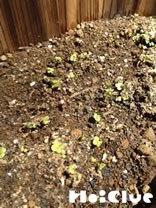 土から小さな芽が出た様子