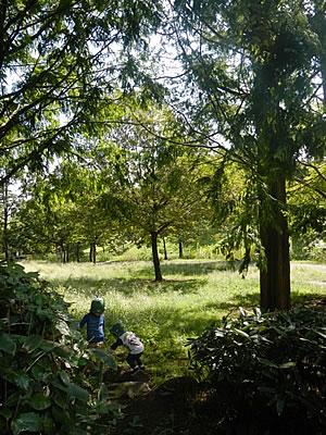 野原で遊ぶ子どもの写真