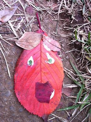 落ち葉の顔の写真