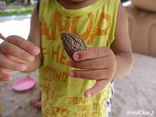 木の実を手に持つ子どもの写真