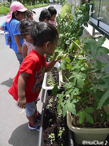 育った野菜を観察する子どもたちの様子
