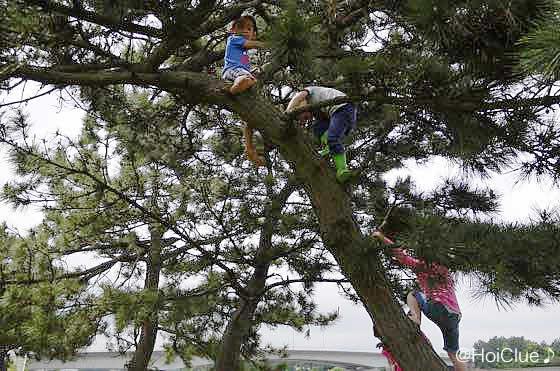 木登りをする子どもたちの様子
