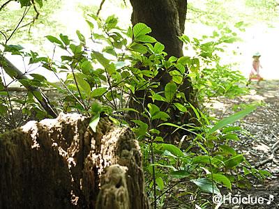 自然の中の草木の写真