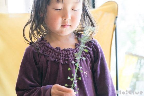 【自然あそび】ペンペン草を、ペンペンならすには?!〜素材/ペンペン草〜