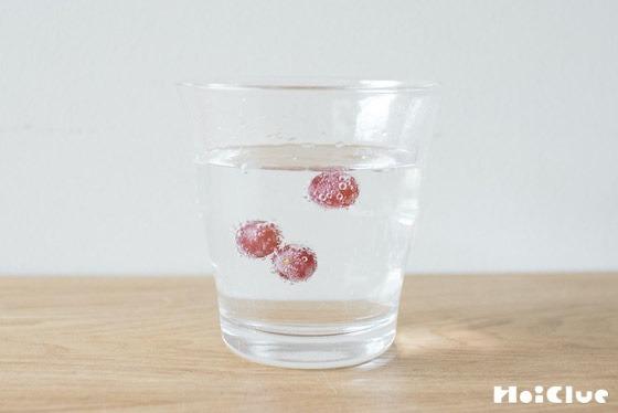 【実験遊び】炭酸水でプカプカぶどう!〜素材/デラウェアの実〜