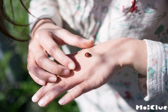 【自然遊び】てんとう虫、何匹見つけられるかな!?〜てんとう虫〜