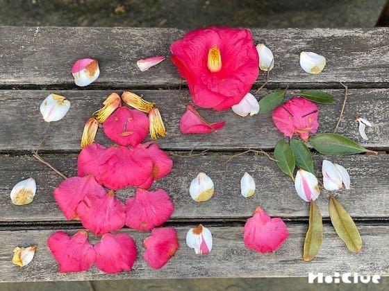 【自然遊び】公園にあるもので「ヒト」を作ってみよう!〜素材/公園や園庭に落ちている自然素材〜