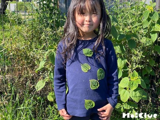 【自然遊び】カラムシの葉でブローチあそび〜植物/カラムシ〜