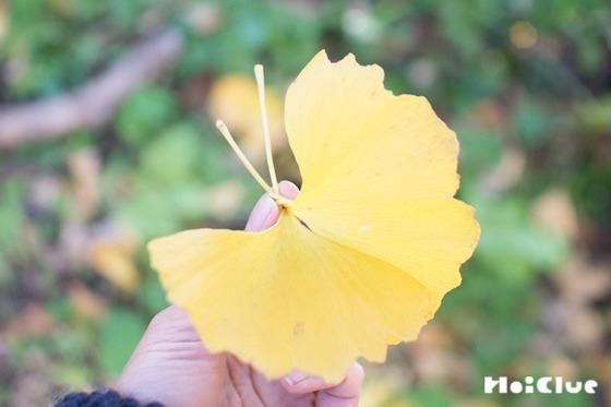 【自然遊び】イチョウの葉でチョウチョを作ろう!〜素材/ イチョウの葉〜