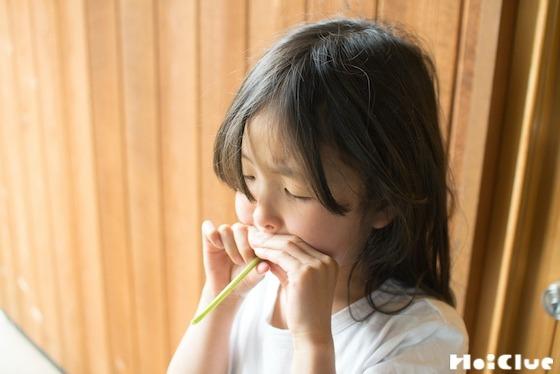 【自然遊び】タンポポの茎で笛を作ろう!〜素材/タンポポの茎〜
