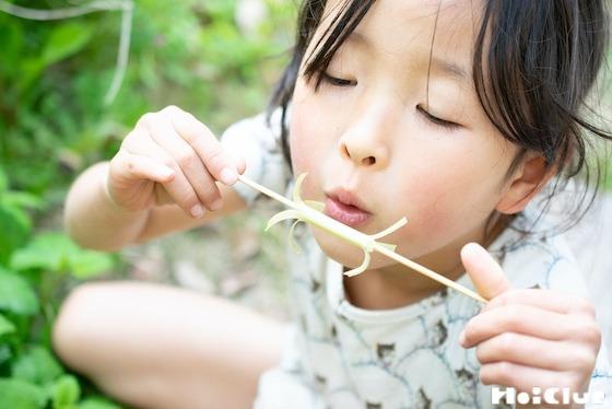 【自然遊び】たんぽぽの茎で作る!くるくる風車〜素材/たんぽぽの茎〜